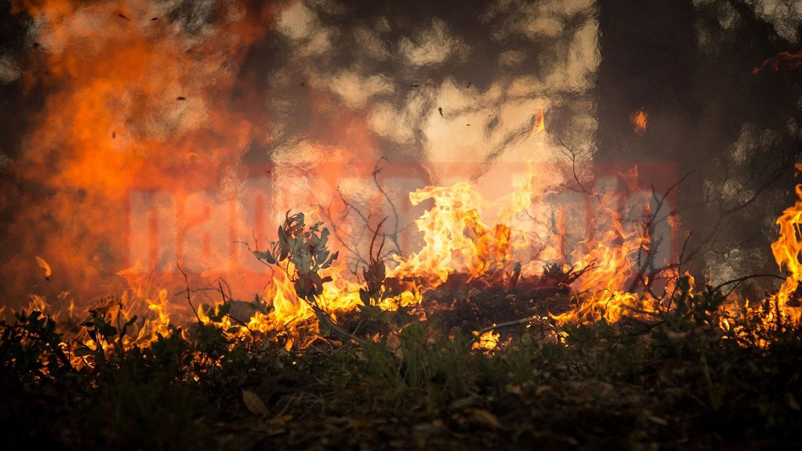pożar lasów Ostrowiec Świętokrzyski