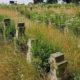 Cmentarz zbiorowe mogiły